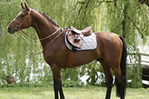Sangles chevaux